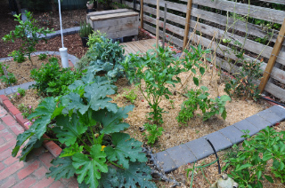 Sanci permaculture garden vegetable patch