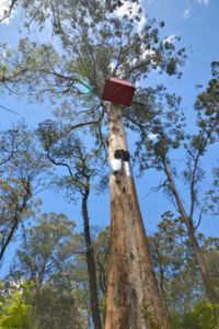 Little Red Toolangi Treehouse