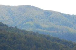 Logging in Armstrong Creek catchment, visible from Reefton Spur Rd